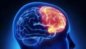 Logran restaurar por primera vez funciones de un cerebro muerto