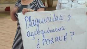 Ecologistas piden frenar importación de plaguicidas en Costa Rica