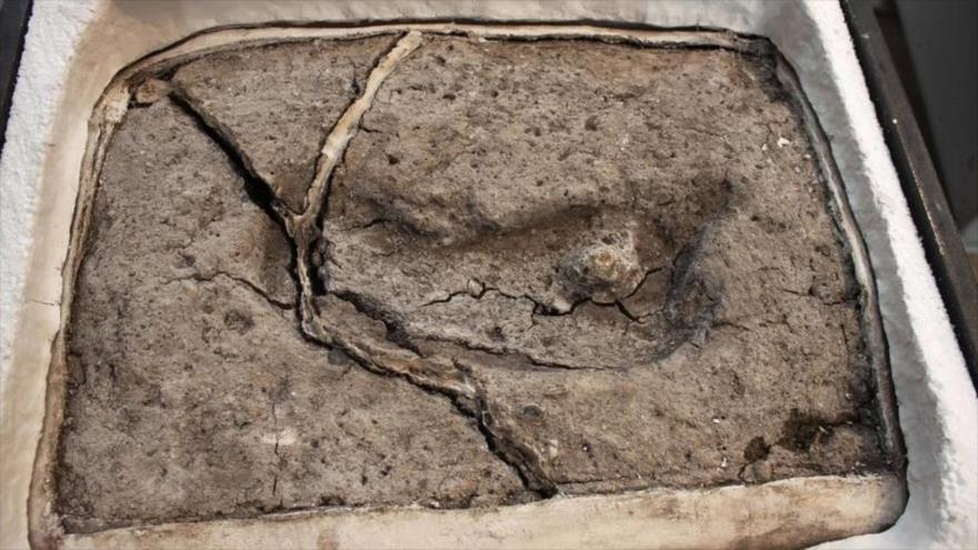 Hallan en Chile la huella humana más antigua en América | HISPANTV