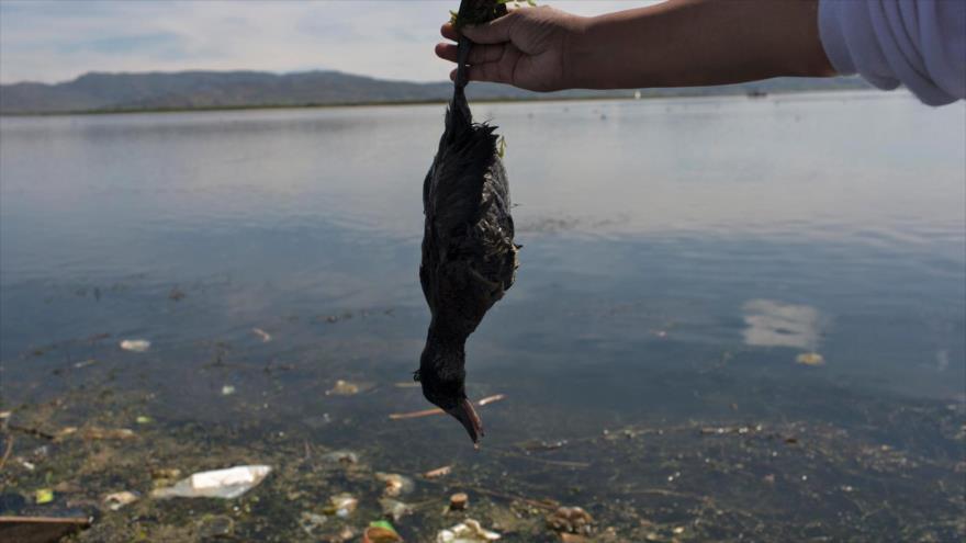ONU advierte de que gran parte de naturaleza está perdida y el resto en declive.