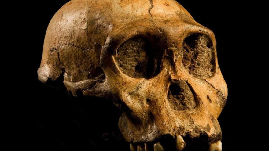 Homínido que vivió hace 2 millones de años no fue origen de hombre | HISPANTV