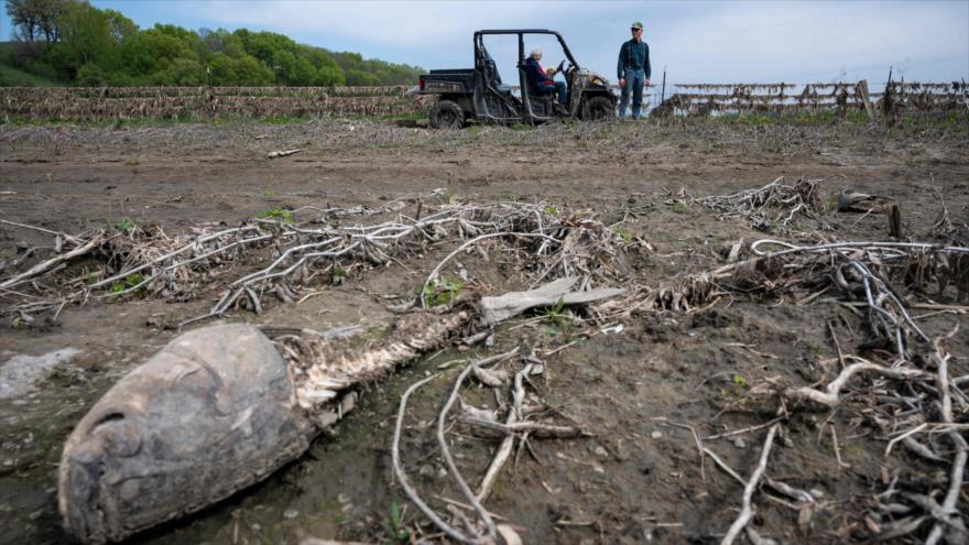Los restos de un pez muerto debido al cambio climático, estado de Nebraska, centro de EE.UU., 3 de mayo de 2019. (Foto: AFP)