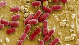 Crean primer organismo vivo con el ADN completamente rediseñado