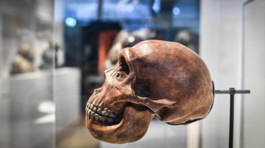 El cráneo de un humano neandertal, en el museo de Homme Paris (la capital de Francia), 26 marzo de 2019. (Foto: AFP)