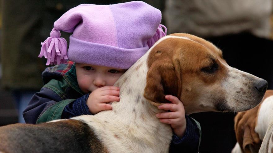 Tener perro o no está influenciado por la composición genética de un individuo.