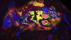 """Científicos hallan un ratón """"colorao"""" de hace 3 millones de años"""