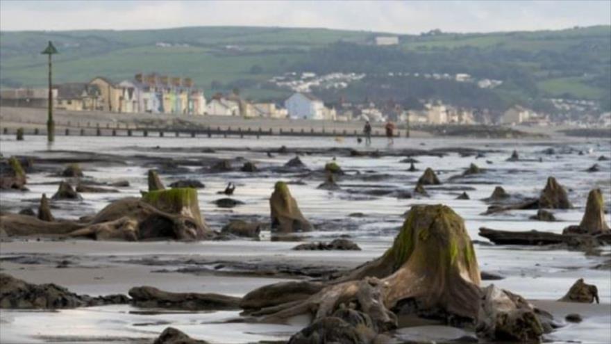 El bosque prehistórico que quedó al descubierto tras una tormenta en Gales.