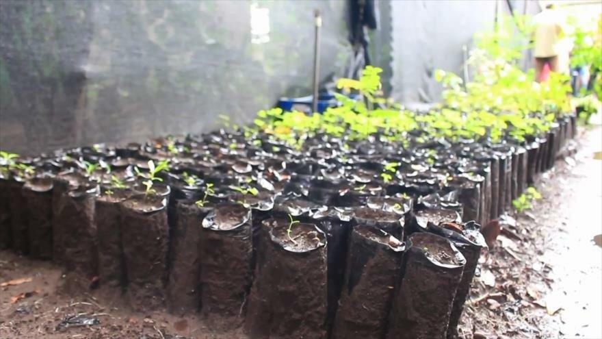 Nicaragua inicia la jornada nacional de reforestación