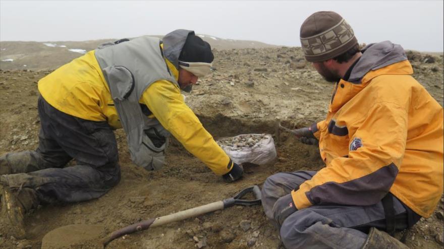 Paleontólogos argentinos en la isla de Marambio, norte de la península Antártica, donde se descubrieron restos de un dinosaurio de 10 toneladas. (Foto: CTyS)