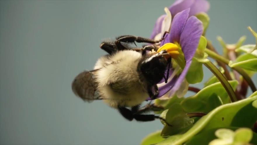 El Toque: Abejas, Orejas y narices, Insectos: alimento del futuro, restaurante submarino