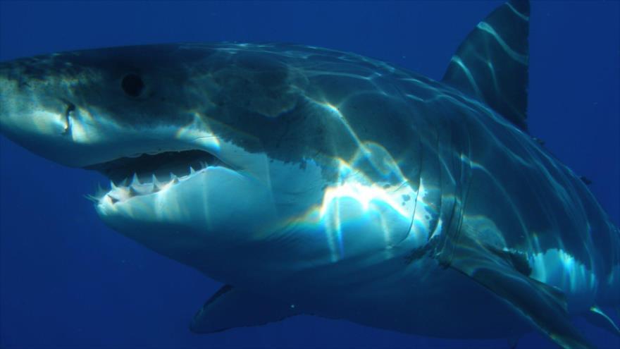 Padre salvó a sus hijos de ataque de un tiburón con un dron.