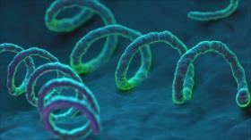 Casos de sífilis aumentan un 70 % en Europa desde 2010
