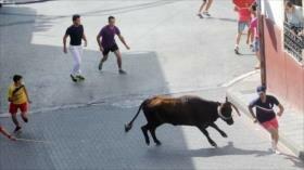 Vídeo: Joven queda inconsciente tras ser cogido por un toro