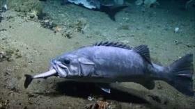 Vean el momento exacto en que un pez devora un tiburón en EEUU