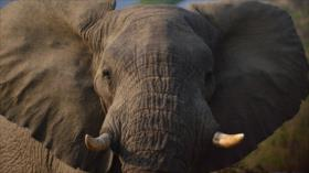 Vídeo: Un elefante enfurecido ataca a turistas en África