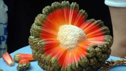 Conozcan la fruta más rara y exótica del mundo