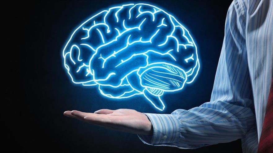Una investigación revela que las personas con una red muy eficiente tienen un conocimiento más general que aquellas con una red estructural menos eficiente.
