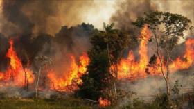 """El mundo se preocupa por incendios en el """"pulmón del planeta"""""""