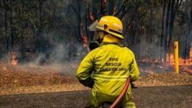Vídeo y Fotos: Incendio en Australia mata a decenas de canguros