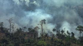 Activistas repudian negligencia de Bolsonaro por Amazonía