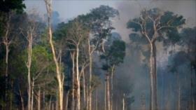 Incendios en la Amazonía encienden las alarmas a nivel mundial