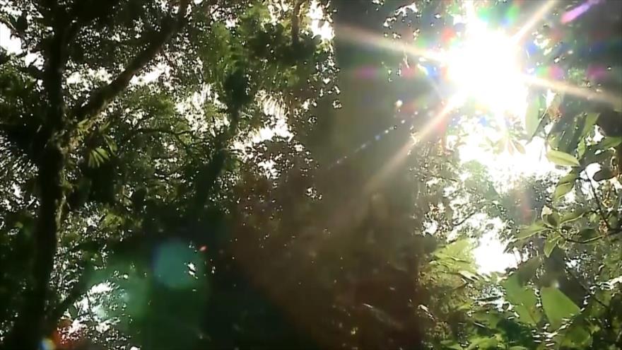 Parques nacionales no tienen suficiente personal en Costa Rica