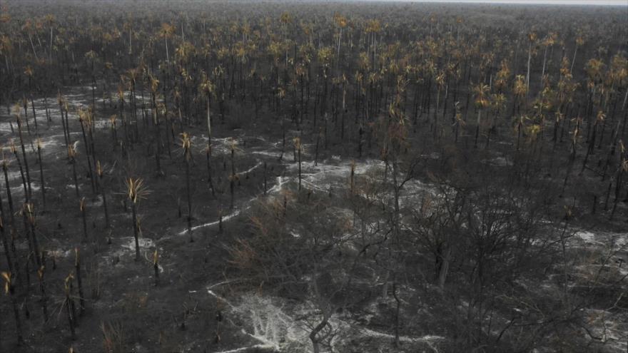 Solicitan a la CPI investigar a Bolsonaro por incendio en Amazonía | HISPANTV
