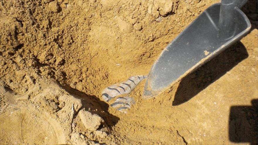 Arqueólogos descubren instrumento quirúrgico del siglo III a.C. en la ciudad de Rostov del Don, suroeste de Rusia.