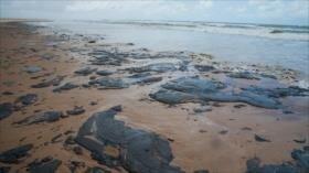 Brasil achaca a petróleo venezolano la contaminación de sus playas