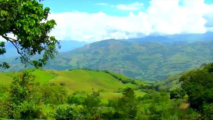 Nicaragua busca plantar más de 25 millones de árboles en el país