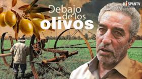 Debajo de los olivos