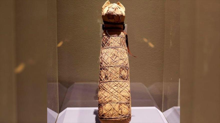 Una antigua momia de gato egipcia, conservada en el Museo de Bellas Artes de Rennes, en Francia.