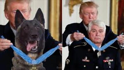 "Trump recurre a photoshop para condecorar a un perro ""héroe"""
