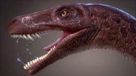 Vídeo: Hallan restos del dinosaurio depredador más antiguo