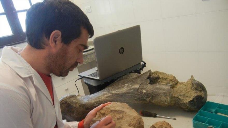 Un experto está evaluando la antigüedad de varios fósiles recuperados en la ciudad de Miramar (Argentina).
