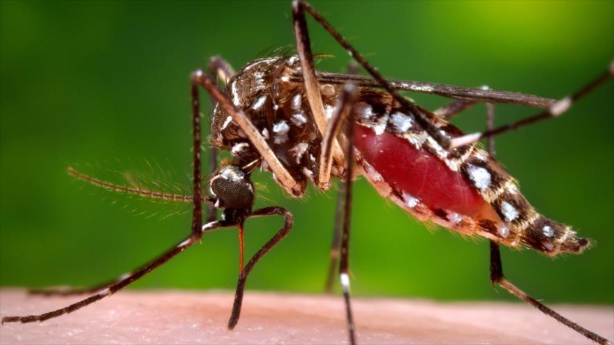 La mitad de la población mundial está en riesgo de padecer el dengue.