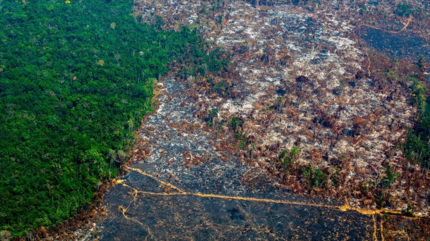 Brasil sufre la mayor deforestación de la Amazonía con Bolsonaro