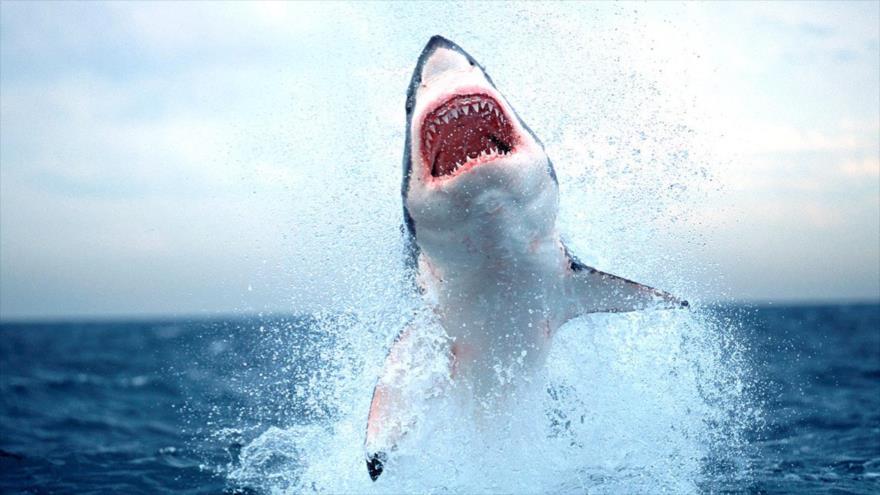 Crean material de neopreno resistente a mordeduras de tiburones