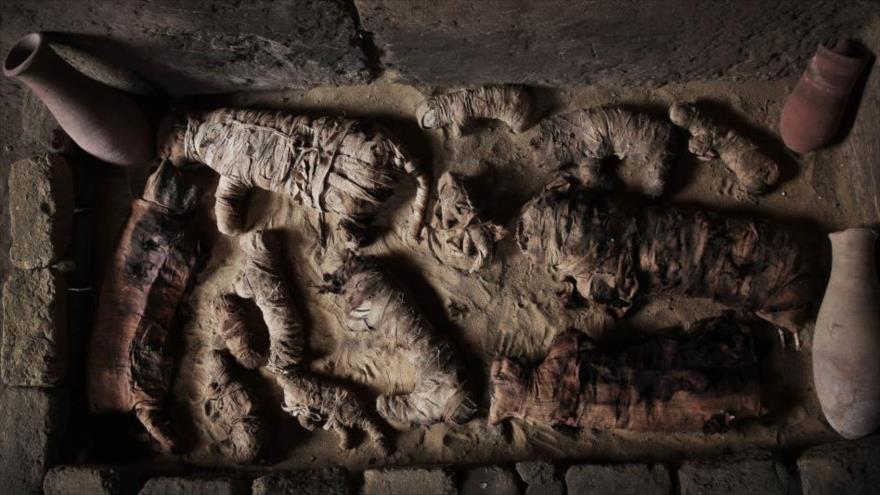 Animales momificados descubiertos en la necrópolis de Saqqara, en el sur de El Cairo, capital de Egipto.