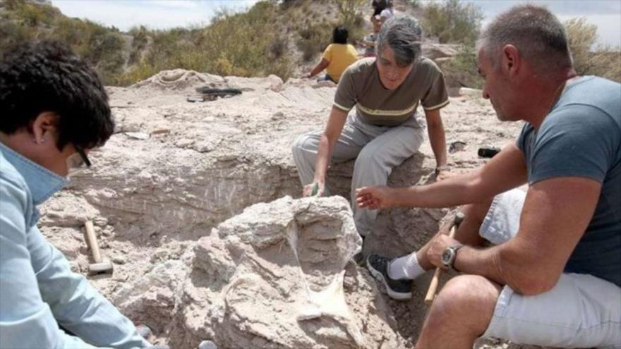 Hallan restos de un enorme titanosaurio de 85 millones de años
