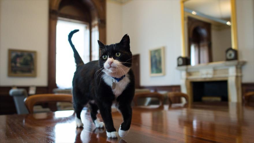 El gato Palmerston, el cazador de ratones del Ministerio de Asuntos Exteriores del Reino Unido.
