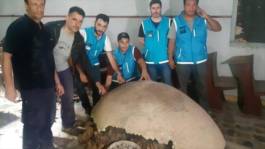Hallan en Argentina fósil de armadillo extinguido hace 10 000 años