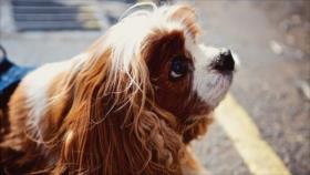 Perros pueden entender palabras pronunciadas por desconocidos