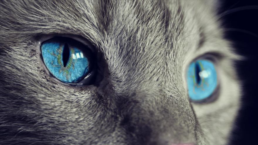 Estudio permite ver el mundo según ven los ojos de los animales