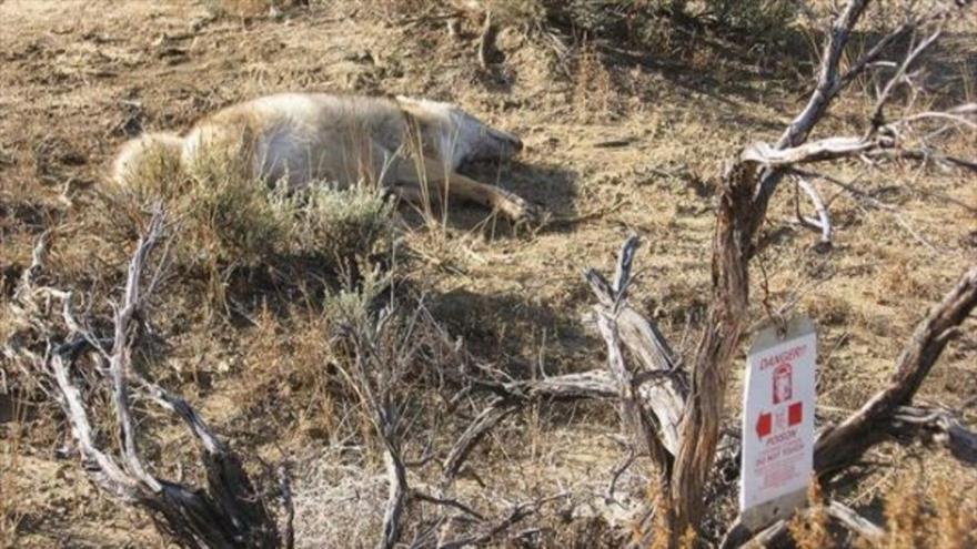 Miles de animales mueren por las bombas de cianuro, incluyendo especies protegidas.