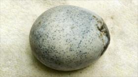 Hallan en Reino Unido intactos huevos de gallina de hace 1700 años