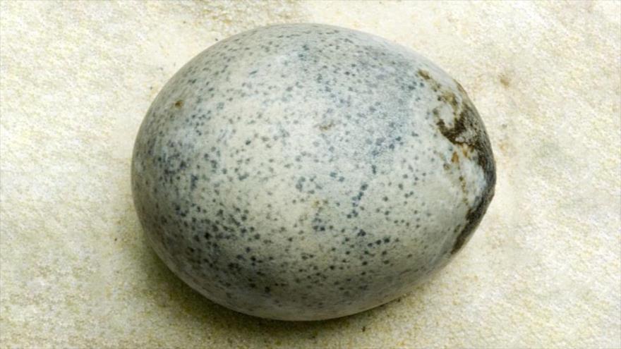 Un intacto huevo de gallina de 1700 años de antigüedad, hallado en la localidad de Aylesbury, en el sur del Reino Unido, 6 de diciembre de 2019.