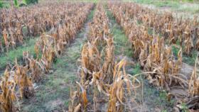 Cambio en circulación atmosférica amenaza producción de alimentos