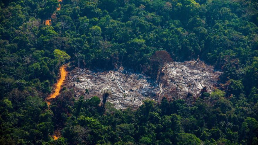 Alarmante aumento de deforestación en la Amazonía brasileña | HISPANTV