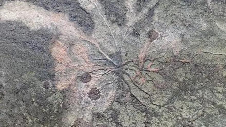 Hallan en EEUU el bosque fósil más antiguo del mundo | HISPANTV